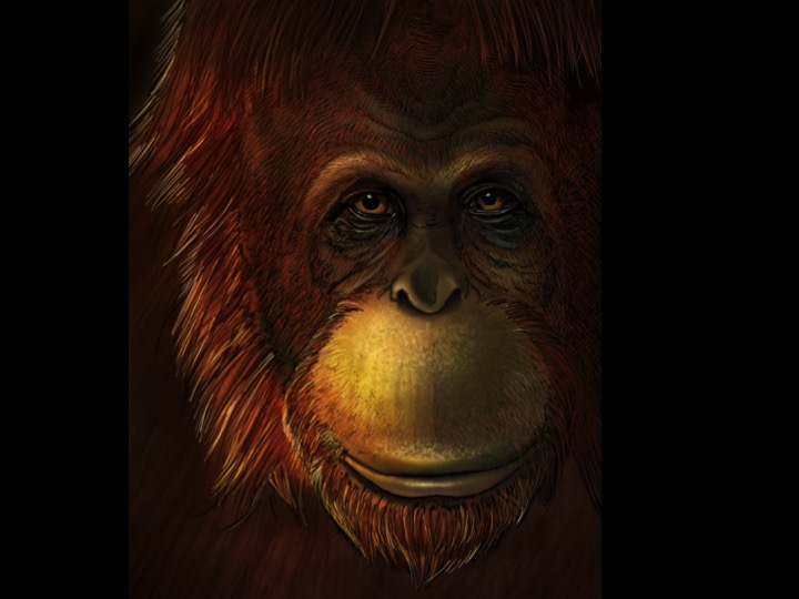Artistic representation of Gigantopithecus blacki (eye close-up).  Credits:  Ikumi Kayama (Studio Kayama LLC)